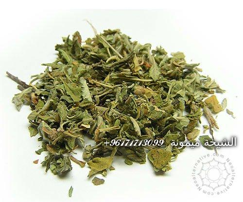 Benefits-of-Damiana-Leaf-Herbal-Extract