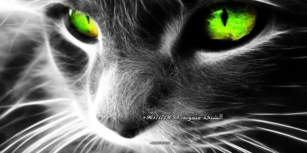 tumblr_static_magic-cat-2