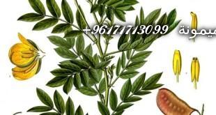 Senna_alexandrina_-_Köhler–s_Medizinal-Pflanzen-031