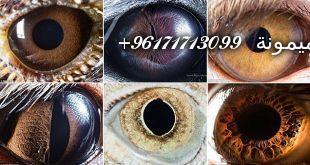 حجر-عين-النمر-1-310x165