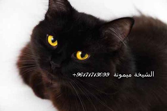 5600fotolia_49748877